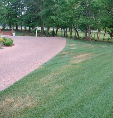 Drought Stress lawn condition