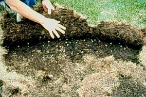 Lawn Damage by Grubs